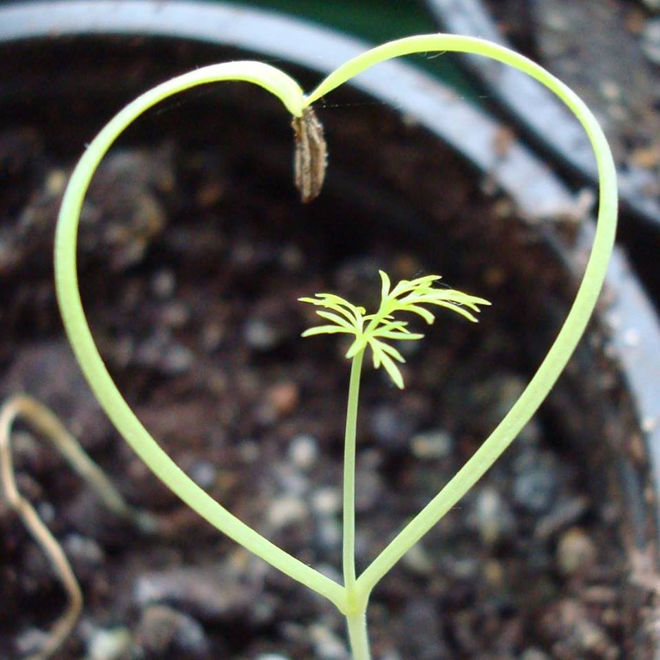 aarde groei
